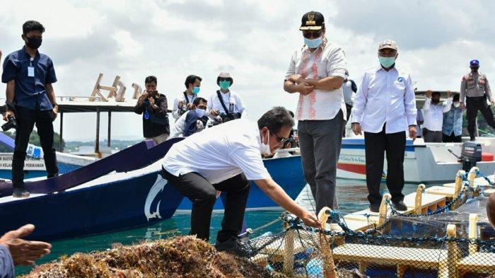 LOBSTER: Gubernur Provinsi NTB Zulkieflimansyah dan Menteri KKP Sakti Wahyu Trenggono pusat budi daya lobster di Lombok, Rabu (24/3/2021).
