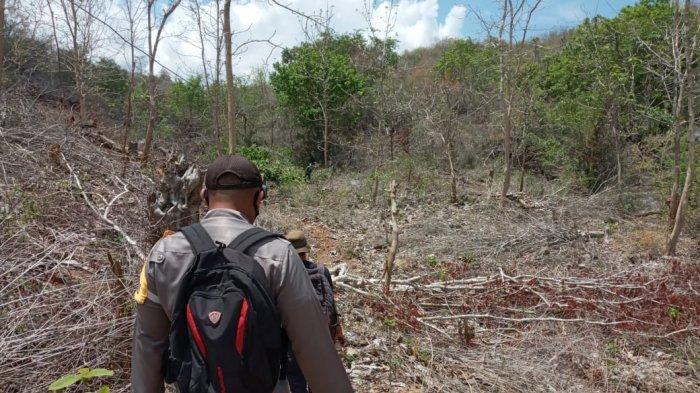 Hutan di NTB Semakin Gundul, Banyak Daerah Kehilangan Mata Air