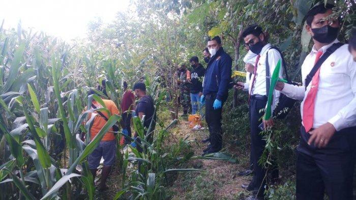 Penyidik Polres Sumbawa saat melakukan olah TKP di ladang jagung yang menjadi lokasi penemuan mayat korban, Senin (16/8/2021).