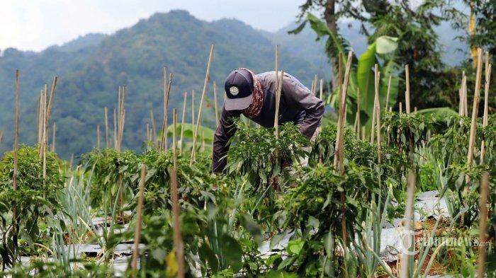Kementan Sebut Ekspor Pertanian Tetap Meningkat Meski di Tengah Pandemi