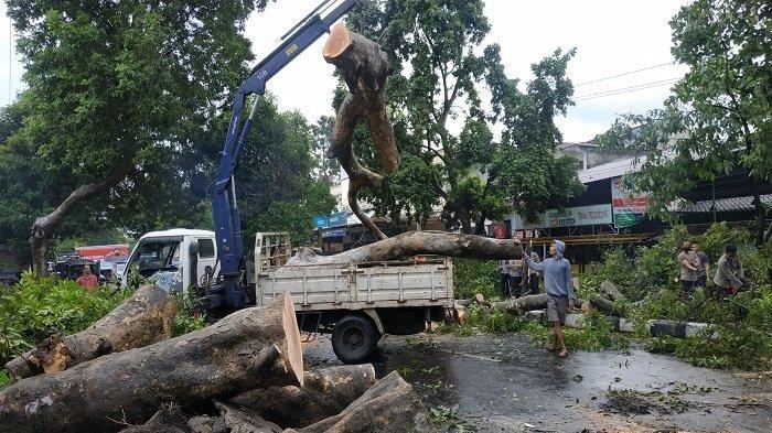 Rawan Pohon Tumbang, Warga Mataram Diimbau Lebih Waspada Saat Berkendara