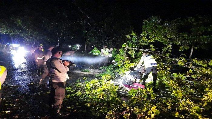 CUACA EKSTREM, Warga Lombok Barat Diminta Waspadai Pohon Tumbang di Jalan Raya
