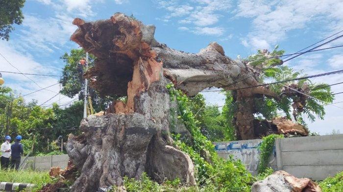 TUMBANG: Pohon Kenari di Jalan Langko, Kota Mataram tumbang akibat angin kencang, Senin (7/12/2020).