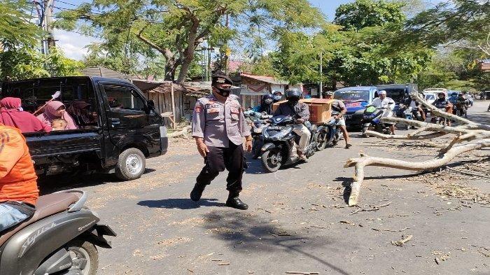 Pengendara Motor Luka Parah Tertimpa Pohon Tumbang di Lombok Tengah