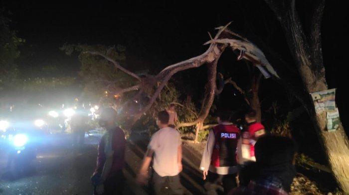 WASPADA, Pohon Tumbang Akibat Hujan dan Angin Kecang Bisa Terjadi saat Musim Kemarau
