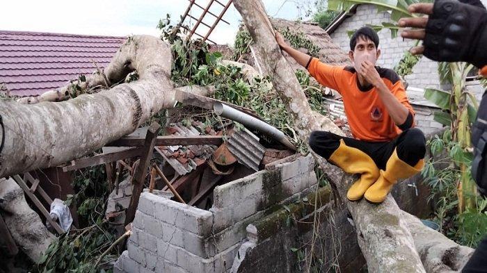 Pohon Bertumbangan dan 12 Rumah Rusak Akibat Angin Kencang di Lombok Timur