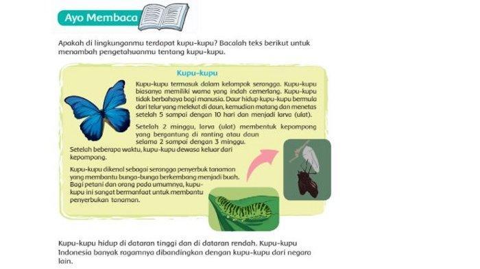 Kunci Jawaban Tema 3 Kelas 4 SD Halaman 48 49 50 51 52: Apa Akibatnya Apabila Kupu-kupu Punah?