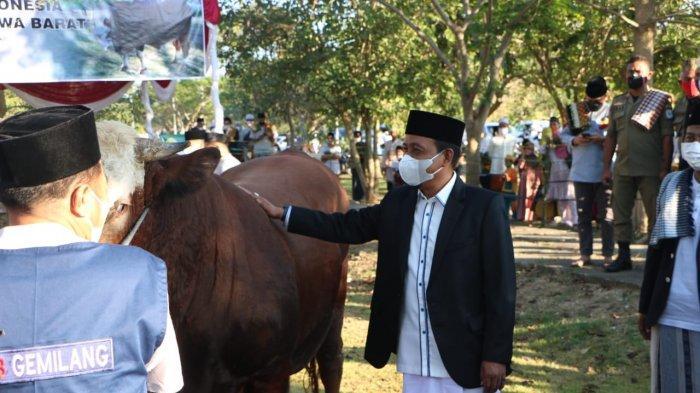 Sapi Lokal Sumbangan Presiden Jokowi di NTB, Dirawat Selama 4 Tahun dengan Pengawasan Dokter