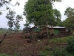 kondisi-hutan-sekaroh-lombok-timur-yang-gundul-dan-mulai-dibangun-menjadi-permukiman-warga.jpg