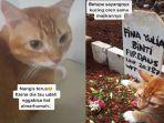kucing-oren-nangis-saat-majikannya-meninggal-dunia.jpg