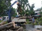 petugas-membersihkan-pohon-tumbang-di-jalan-sriwijaya-kota-mataram.jpg