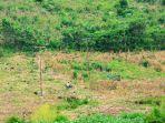 seorang-petani-melintas-di-lahan-jagung-miliknya-menggunakan-sepeda-motor.jpg