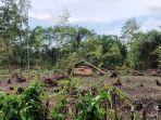 tampak-bekas-penebangan-pohon-di-kawasan-hutan-hpl-milik-warga-di-desa-setiling-lombok-tengah.jpg
