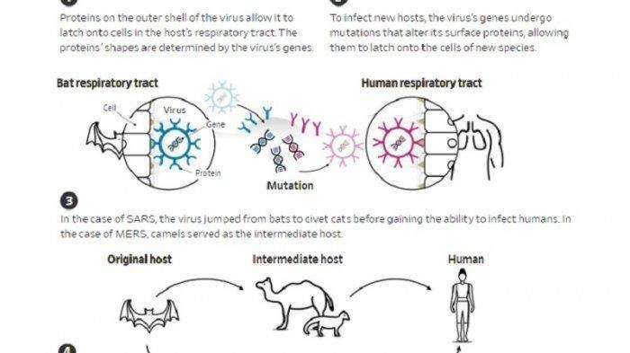 Lima Proses Penyebaran Virus Corona dari Hewan ke Manusia, Bisa Menyebabkan Penyakit Pneumonia