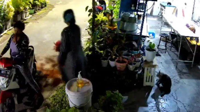 Emak-Emak Terekam CCTV Curi Tanaman Hias Senilai Rp 1 Juta, Simpan Barang Curian di Balik Busananya