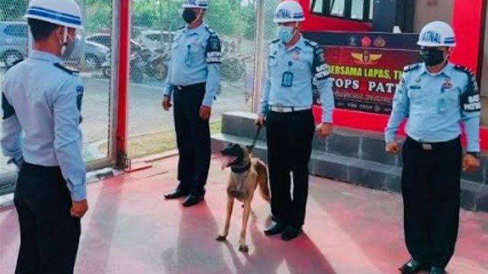 Mengenal Ayu Tinktink, Anjing Pelacak Penjaga Lapas Narkotika Pamekasan yang Tangguh dan Cerdas