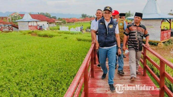 Bupati Pamekasan, Baddrut Tamam (kiri dari depan) saat melihat wisata sawah di Desa Bajang, Kecamatan Pakong, Kabupaten Pamekasan, Madura, Senin (1/3/2021) kemarin.