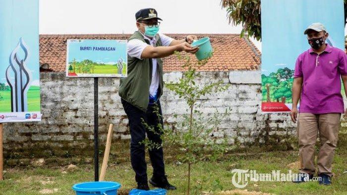 Pemkab Pamekasan Dapat Bantuan 600 Bibit Pohon Ketapang Kencana, Akan Ditanam di Lingkungan Sekolah
