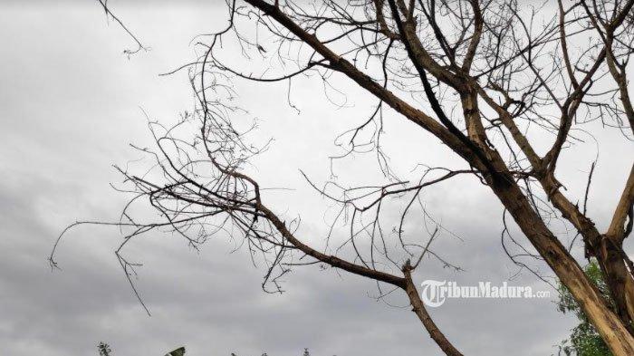 Waspada Cuaca Buruk Selama Tiga Hari ke depan di Jawa Timur, Mulai Mojokerto hingga Pamekasan