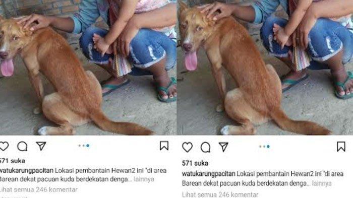 Viral 11 Anjing Dipukul Pakai Linggis hingga Dibakar Sadis di Pacitan, Polisi Panggil 4 Orang Saksi