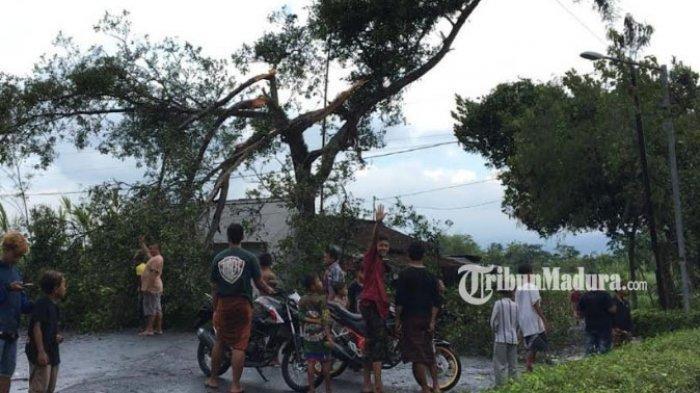 Angin Puting Beliung Terjang Desa Sukosari Bondowoso, Pohon Tumbang, Timpa Rumah Warga hingga Musala