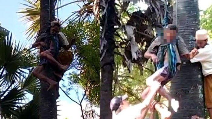 Sesak Napas Kambuh, Kakek asal Sumenep Meninggal Dunia di Pohon Siwalan saat Mengambil Legen