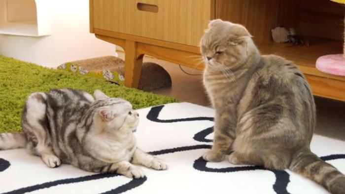 Kadang Barbar, Kelakuan Aneh Kucing Ternyata Punya Arti Tersendiri, Ada Berkedip hingga Makan Rumput