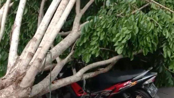 Waspada, Kawasan Akses Suramadu Rawan Pohon Tumbang, Pemotor Tertimpa Pohon di Kota Bangkalan