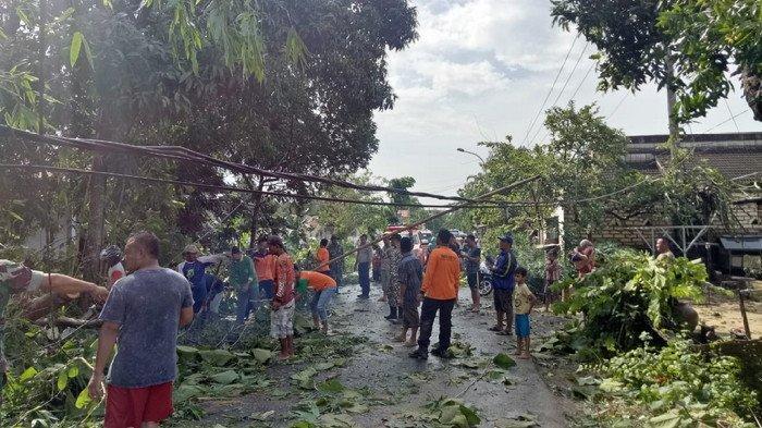 Hujan Deras dan Angin Puting Beliung Terjang Pamekasan, Pohon Tumbang Rumah Warga Rusak juga Listrik