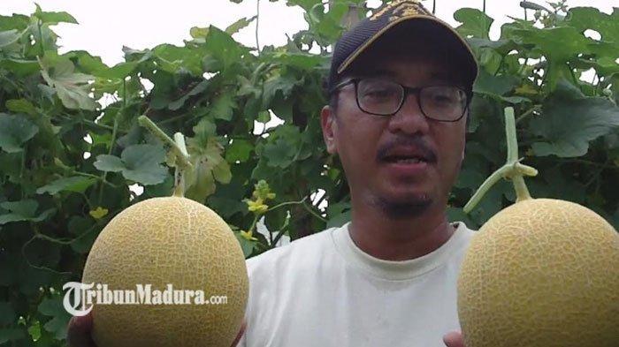 Belajar dari Kerugian, Petani di Gresik Kini Raup Manisnya Untung dari Menanam Buah Melon