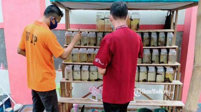 Kisah WBP Lapas Narkotika Pamekasan Budidaya Ikan Cupang, Laris Manis Terjual dengan Harga Fantastis