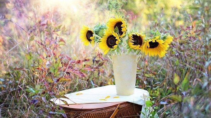 Arti Mimpi Tentang Bunga Putih dan Mimpi Memetik Bunga, Pertanda Keberuntungan hingga Kegagalan