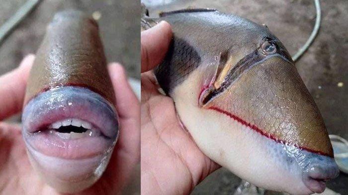 Viral Foto Ikan Mempunyai Mulut dan Gigi Mirip Manusia, Dikenal Suka Menyerang, Nelayan Sampai Kaget