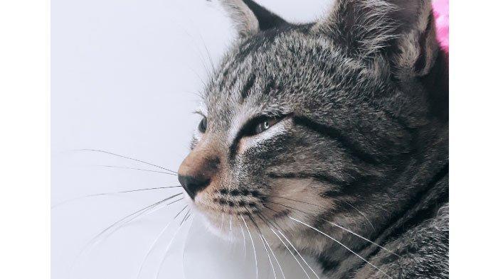 Kucing dan Anjing Peliharaan Bisa Tertular Covid-19 dari Manusia, Ini Gejala dan Cara Menghadapinya