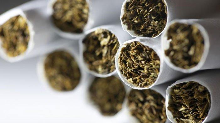 Siap-siap, Akhir September 1697 Buruh Tembakau Bakal Dapat 1,5 Juta dari Cukai Rokok