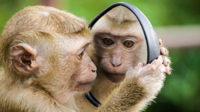 Ramalan Shio Minggu 28 Maret 2021: Hari yang Buruk bagi Shio Monyet, Shio Kambing hingga Shio Tikus
