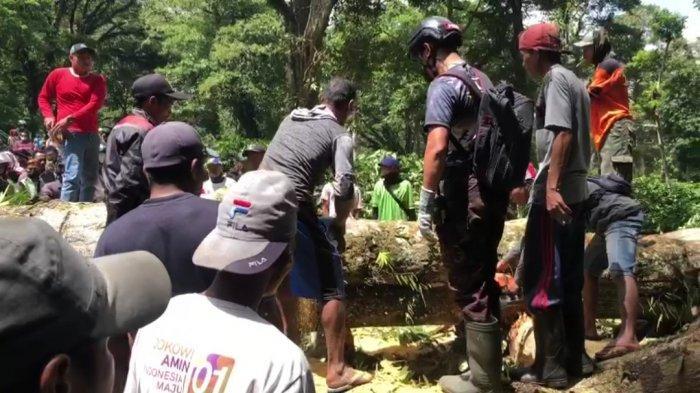 Hati-Hati Jalur Gunung Gumitir Jember - Banyuwangi Rawan Pohon Tumbang dan Tanah Longsor