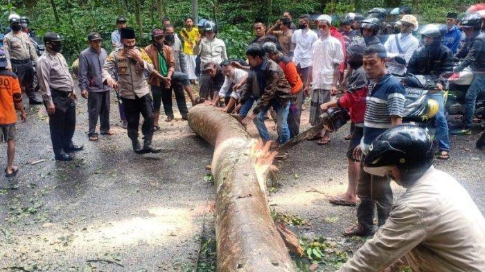 Pohon Tumbang di Jalur Gumitir Timpa Bapak dan Anak saat Berboncengan Motor, Dibawa ke RS Banyuwangi