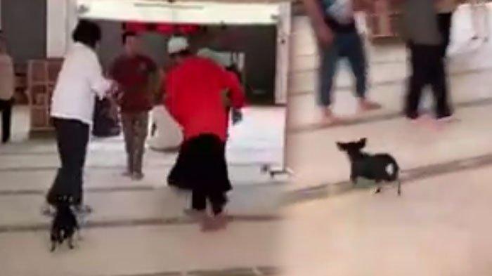 Masih Ingat Kasus Viral Anjing Masuk Masjid? Pemiliknya Divonis Bebas oleh Hakim, Disoraki Pura-Pura