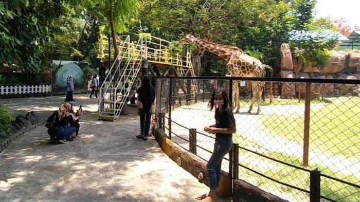 Sudah Kembali Dibuka, Kebun Binatang Surabaya (KBS) Menarik Minat Pengunjung Meski Ada Pembatasan