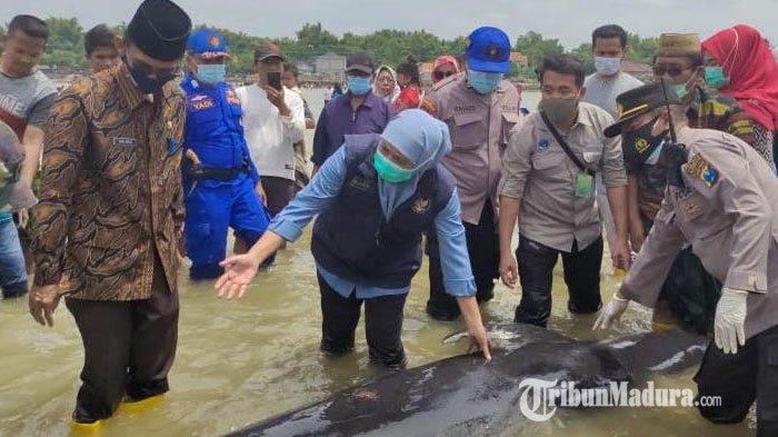 Puluhan Ekor Ikan Paus Mati Terdampar di Pesisir Perairan Bangkalan, Kyai Muchlis: Kali Ini Aneh
