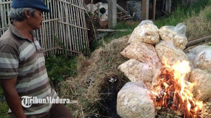 1,5 Ton Keripik Apel di Kota Batu Dibakar, ada yang Dijadikan Pakan Ternak, Begini Penyebabnya