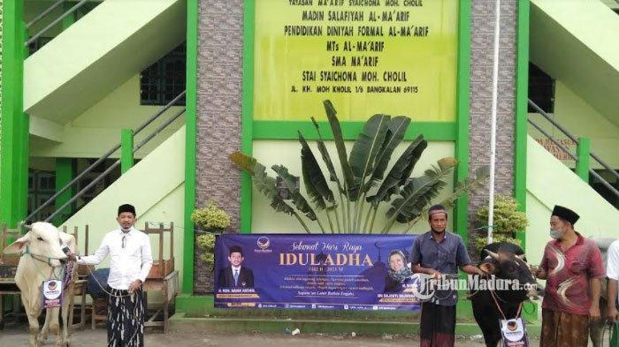 Jelang Hari Raya Idul Adha, Partai NasDem Kirim Bantuan 4 Ekor Sapi Jantan ke Ponpes di Bangkalan