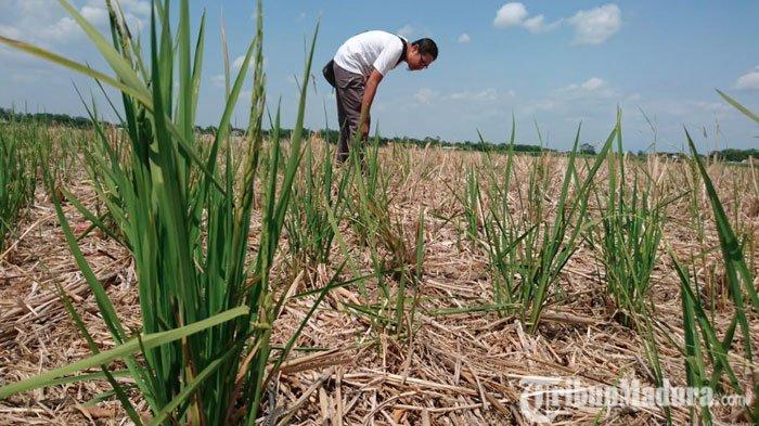Puncak Musim Kemarau di Sampang Diprediksi Agustus 2020, Air Bersih Didistribusikan ke Desa-desa