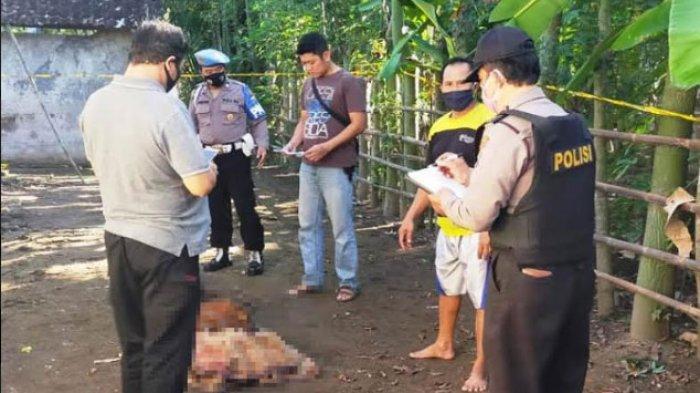 BREAKING NEWS - Anak Bunuh Ayah Kandung di Desa Banjarejo Tulungagung, Mayat Ditemukan Tetangganya