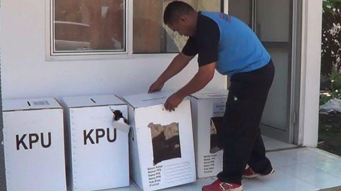 Kotak Suara Pilpres di Jember Rusak Dimakan Rayap Sehari Jelang Pemilu, Ada Lubang Kecil di Gudang