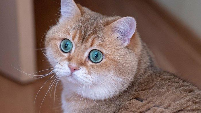 Waspada Jika Kucing Mengalami Penurunan Berat Badan, Kenali 7 Penyebab Berat Badan Kucing Menurun