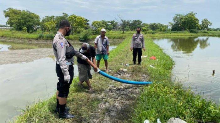 Petani Tambak di Gresik Tewas saat Hendak Panen Ikan Bandeng, Tak Sempat Dirawat di Rumah Sakit