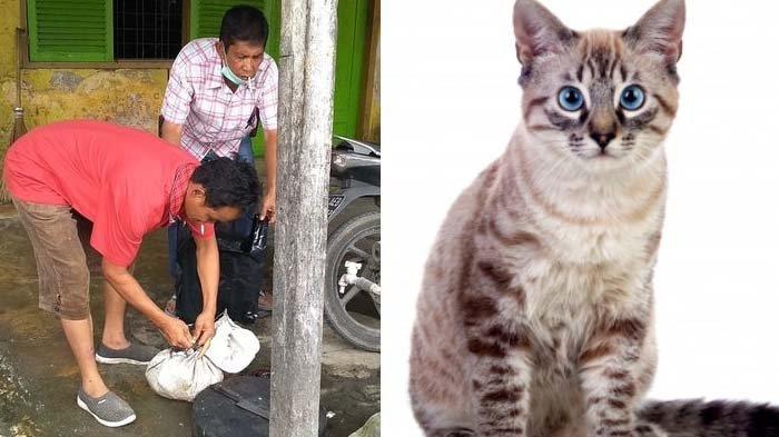 KEJI Aksi Jagal Kucing, Kepala Hewan Dikumpulkan di Karung, Kesaksian Warga Ngeri, 1 Korban Menangis