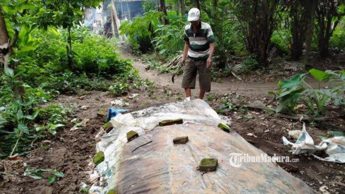 Atasi Kelangkaan Pupuk, Petani di Kediri Buat Pupuk Organik dengan Manfaatkan Kotoran Sapi